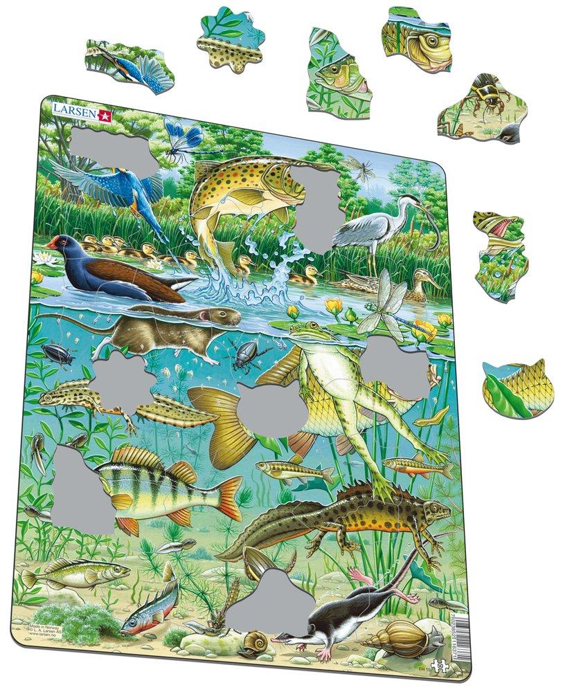 Zvieratá vodné – Jazero, rybník, pstruh, kapor, ostriež, žaba, mloky, rybárik, volavka, kačica – Obrázkové puzzle