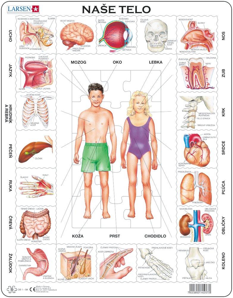 Prírodoveda – Spoznaj naše ľudské telo, zloženie, stavba ľudského tela – Náučné obrázkové puzzle