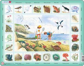 Prírodoveda – Deti na morskom pobreží, morské živočíchy, ryby, vtáky, riasy – Náučné obrázkové puzzle