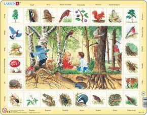Prírodoveda – Deti v lese, lesné zvieratá a rastliny, ďateľ, sova, jež, srnec, líška, mravec – Náučné obrázkové puzzle