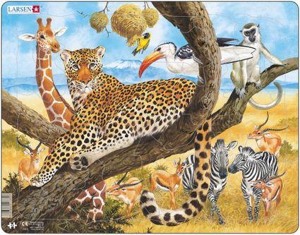 Zvieratá exotické – Africká savana, obdobie sucha, leopard, žirafy, zebry, gazely – Obrázkové puzzle