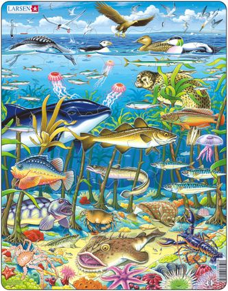 Zvieratá morské – morské ryby, vtáky, riasy, koraly, medúzy, hviezdice, kosatka – Obrázkové puzzle