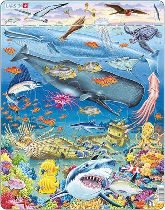 Zvieratá morské – Veľryby, vorvaň, vráskavec, žraloky, raja, ryby, koralový útes, vrak lode – Obrázkové puzzle