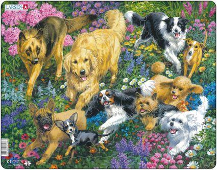 Zvieratá domáce – Psy na lúke v tráve, desať plemien psov, vlčiak, retríver, kólia, čivava, pudel, teriér – Obrázkové puzzle